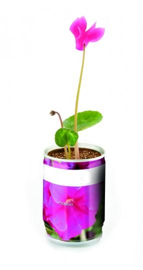 maceta-petunia